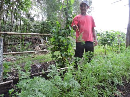 O dono da horta