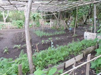 Alimentos no quintal
